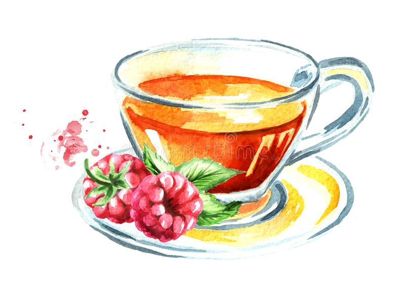 Health tea. Cup of tea with raspberries. Watercolor hand drawn illustration, isolated on white background vector illustration