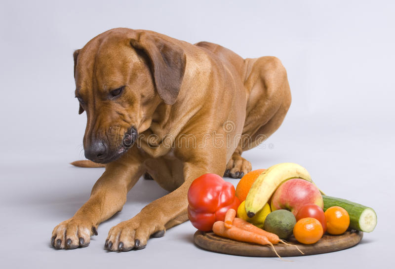 Download Healthy dog food stock photo. Image of health, fruit - 12584158