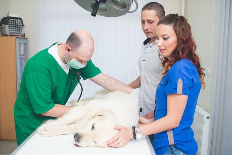 Healthy dog under medical exam stock image