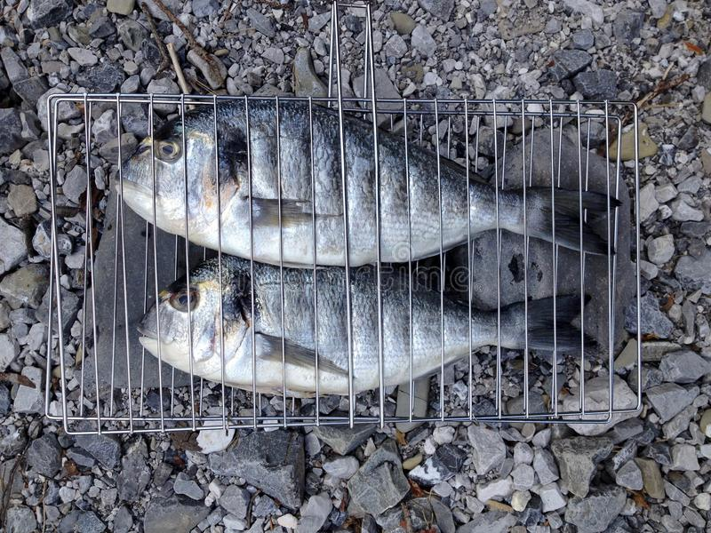 Healthy eating. Fresh gilt-head bream fish prepared for BBQ royalty free stock image