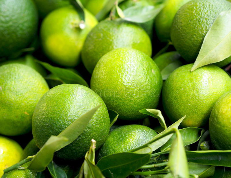 Healthy food - close view of unripe green mandarins att Spanish farm market. Spain royalty free stock photos