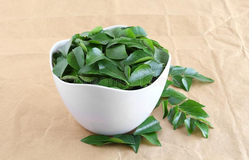 Healthy Food Curry Leaves or Kadi Patta in a Bowl royalty free stock image