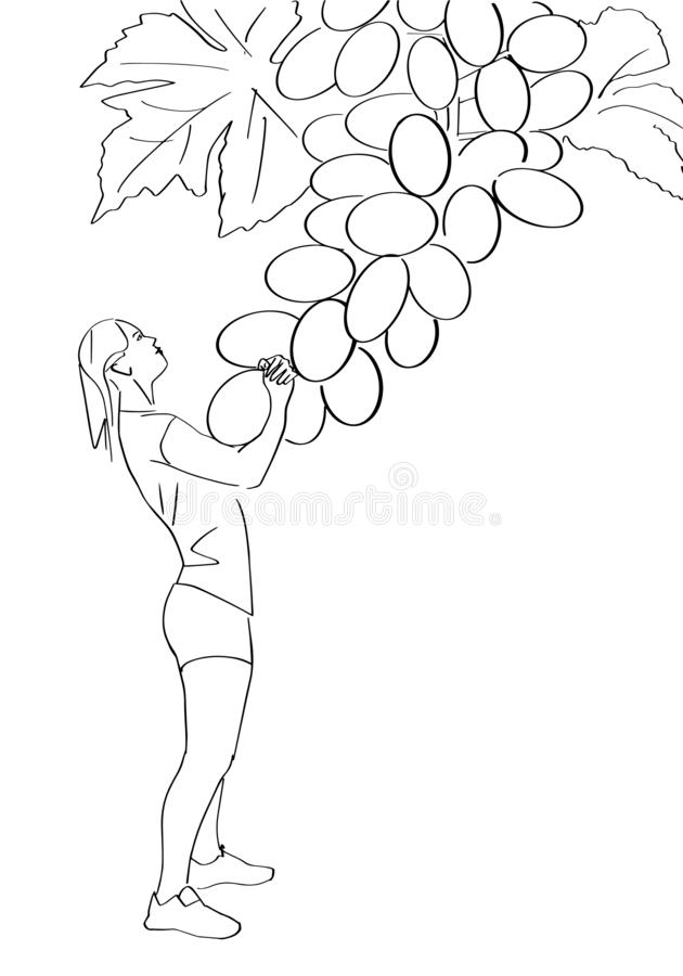Young woman pulls a grape. stock illustration
