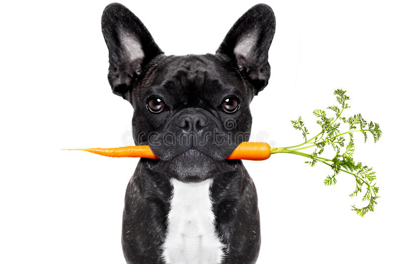 Healthy food dog stock images
