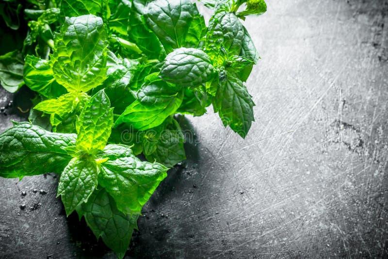 Healthy food. Fresh mint stock image