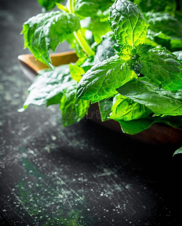 Healthy food. Fresh mint stock photography