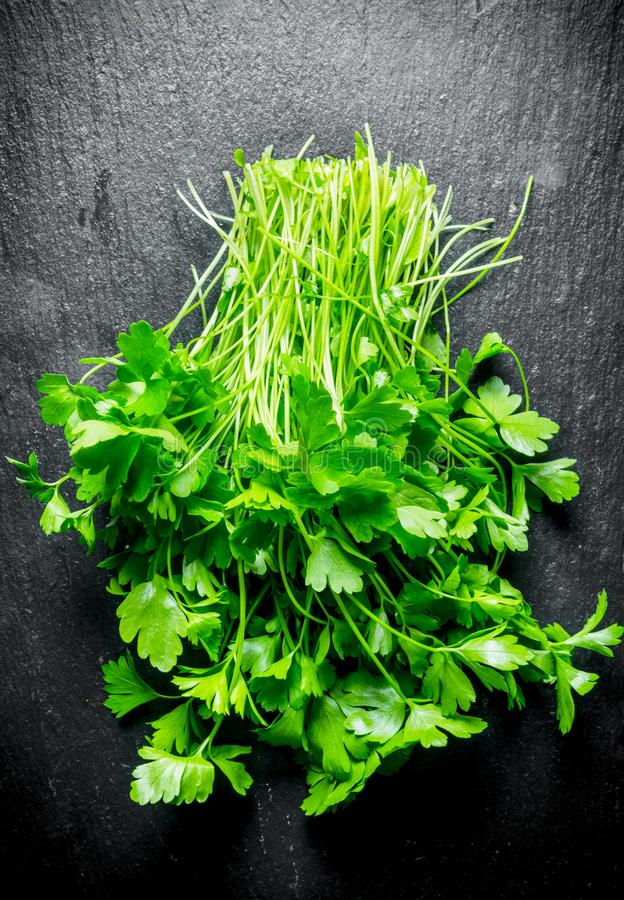 Healthy food. Fresh parsley stock images
