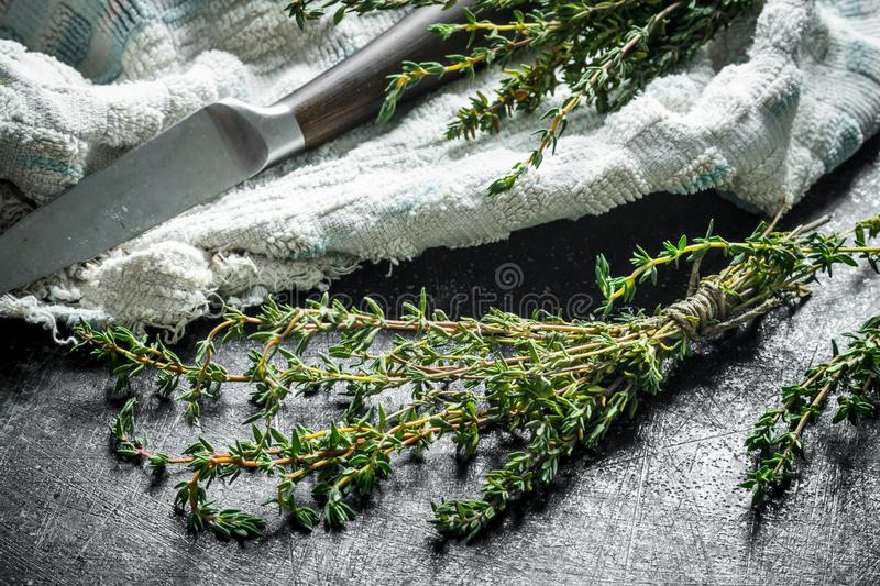 Healthy food. Fresh thyme royalty free stock photo
