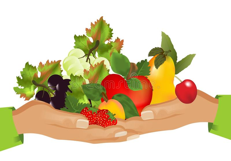 Healthy food (fruits), cdr vector stock image