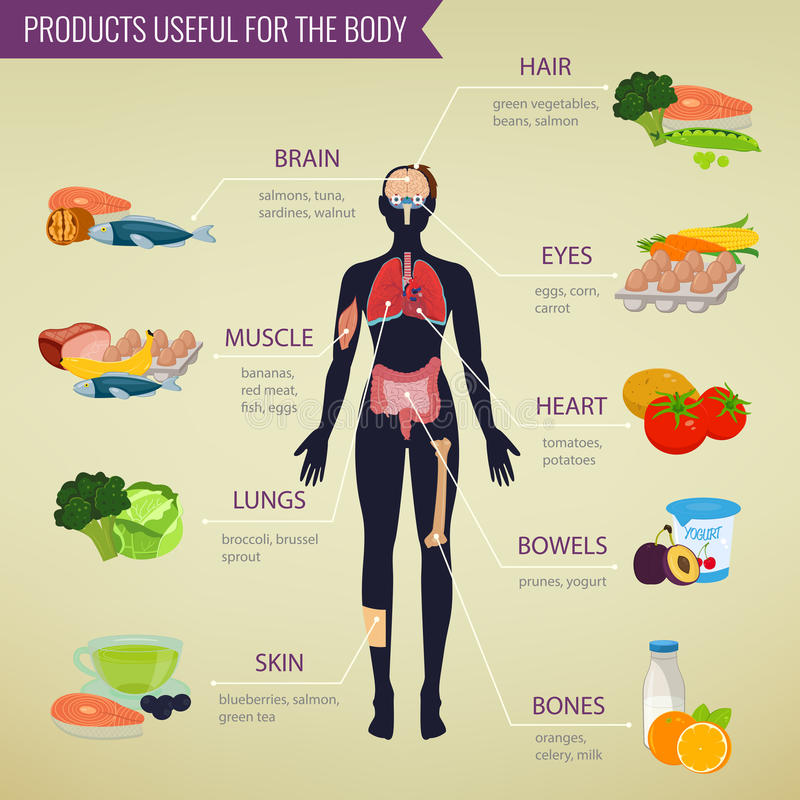 Healthy food for human body. Healthy eating infographic. Food and drink. Vector stock illustration