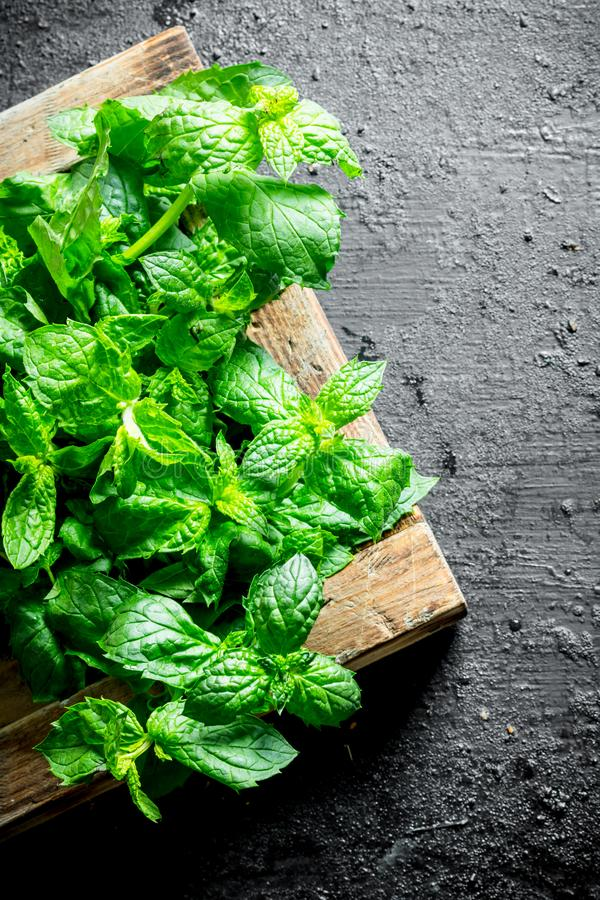 Healthy food. Mint on tray stock images