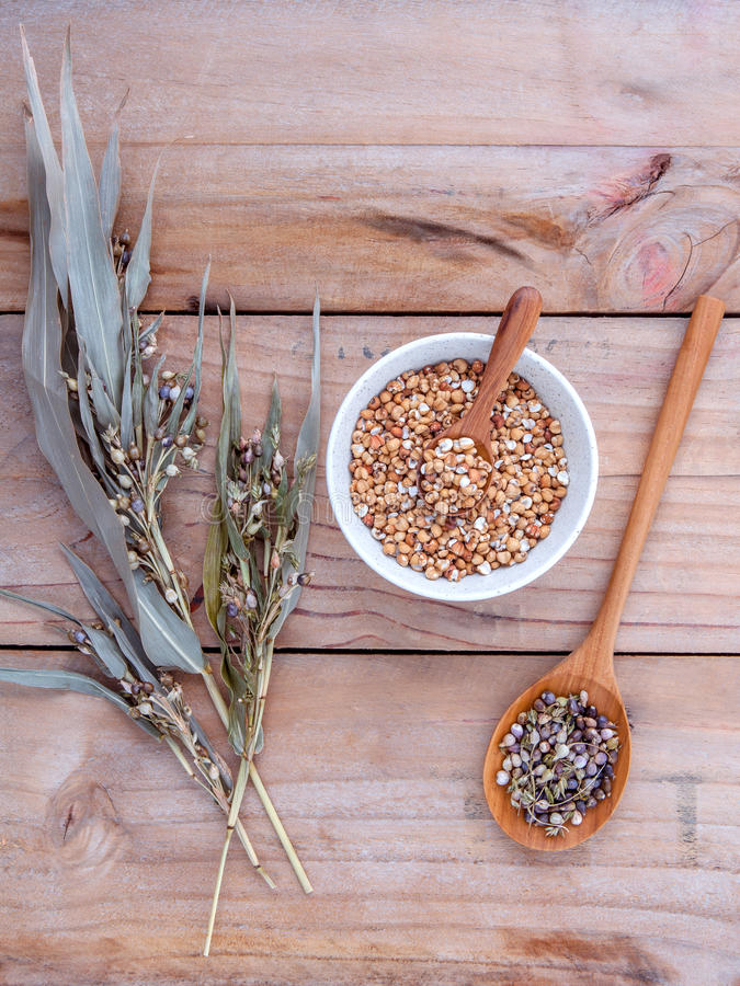 Healthy food, Organic whole grains millet rice in the bowl ,white millet and millet cob against rustic wooden background. royalty free stock image