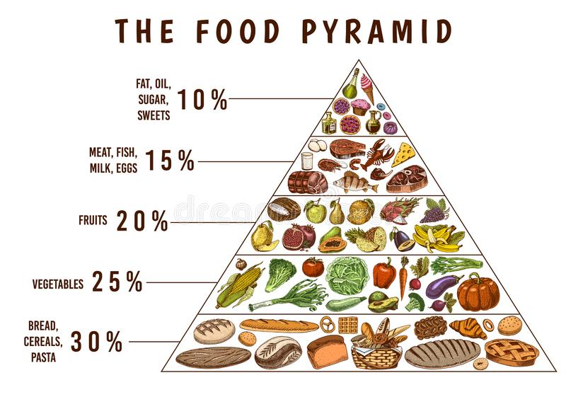 Healthy food plan pyramid. Infographics for Balanced Diet percentage. Lifestyle concept. Ingredients for meal plan. Nutrition guide. Hand drawn in vintage vector illustration