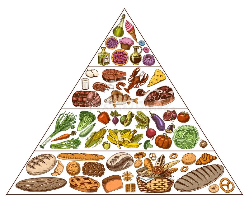 Healthy food plan pyramid. Infographics for Balanced Diet percentage. Lifestyle concept. Ingredients for meal plan. Nutrition guide. Hand drawn in vintage stock illustration
