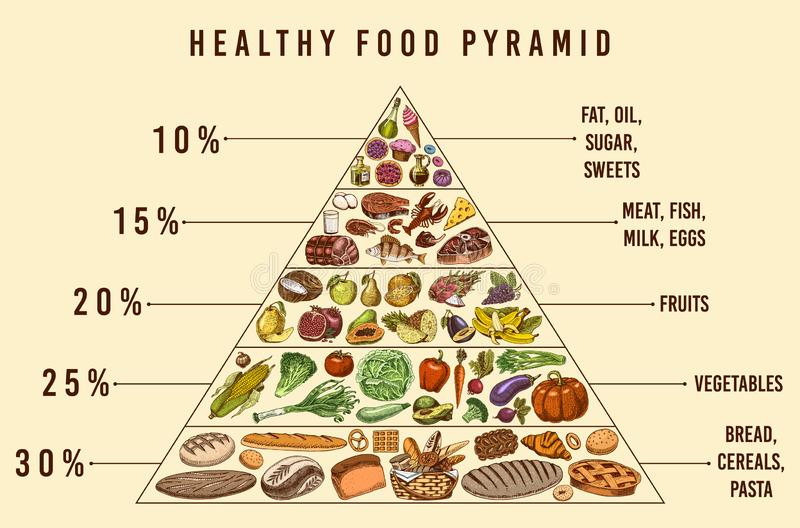 Healthy food plan pyramid. Infographics for Balanced Diet percentage. Lifestyle concept. Ingredients for meal plan. Nutrition guide. Hand drawn in vintage royalty free illustration