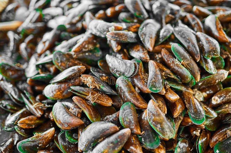 Healthy Food. Seafood Background. Asian Green Mussels. Nutrition stock photo