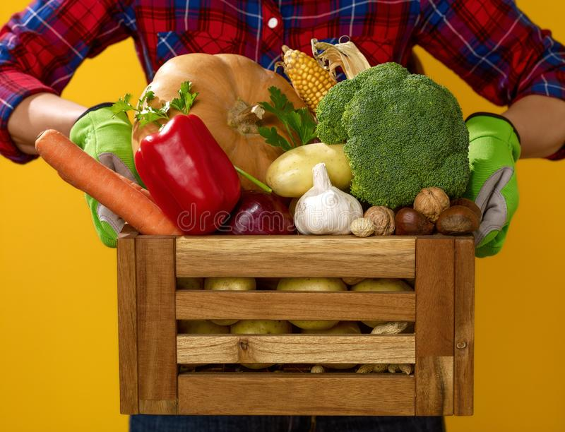 Closeup on woman grower showing box of fresh vegetables. Healthy food to your table. Closeup on woman grower in checkered shirt isolated on yellow background stock photography