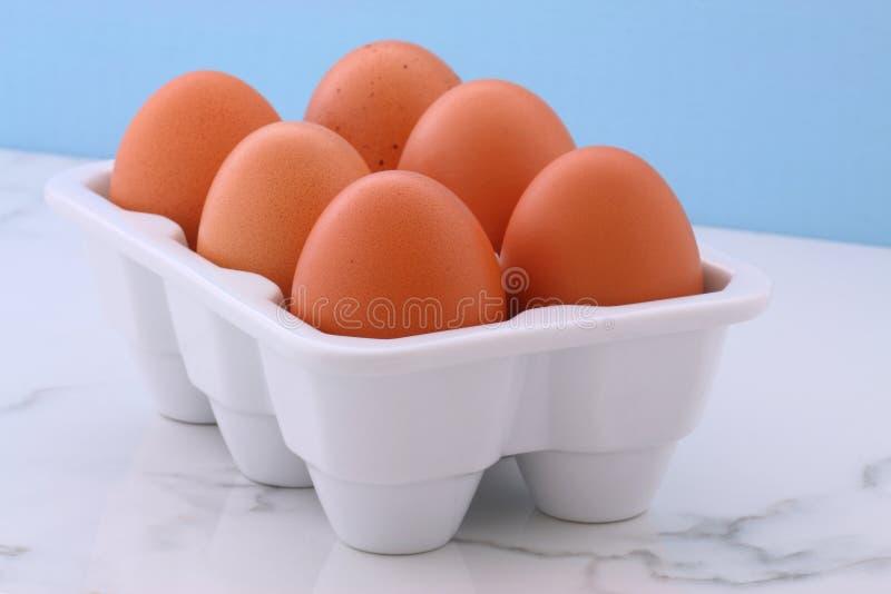 Fresh free range eggs stock image