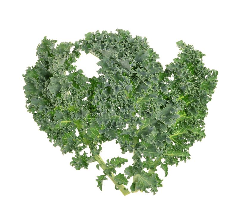A healthy fresh  organic curly kale leaves  on an isolated white stock images
