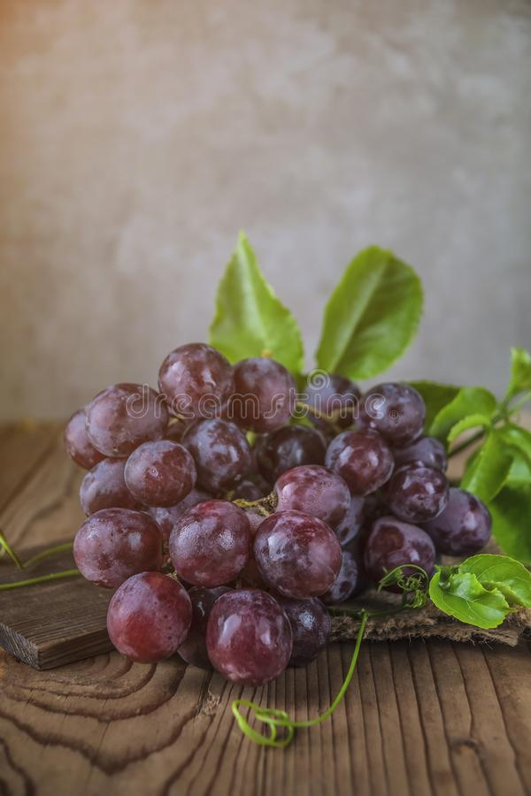 Healthy fruits Red grapes in the vineyard stock images