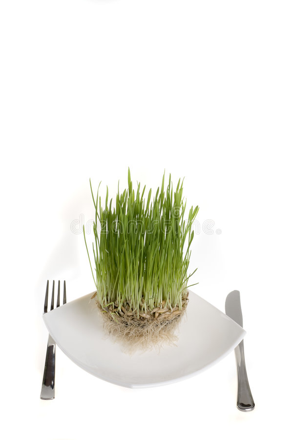 Free Healthy Green Plant Food On A Plate. Royalty Free Stock Photos - 4791998