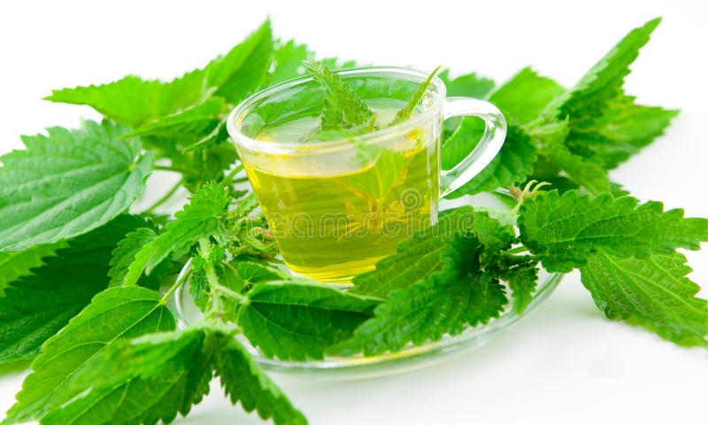 Healthy green tea with stinging nettle, fresh herb around,. Green tea with stinging nettle on white background, isolated, with fresh plants around stock photos