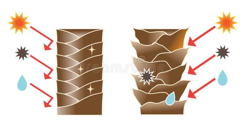 Healthy hair and damaged hair stock illustration