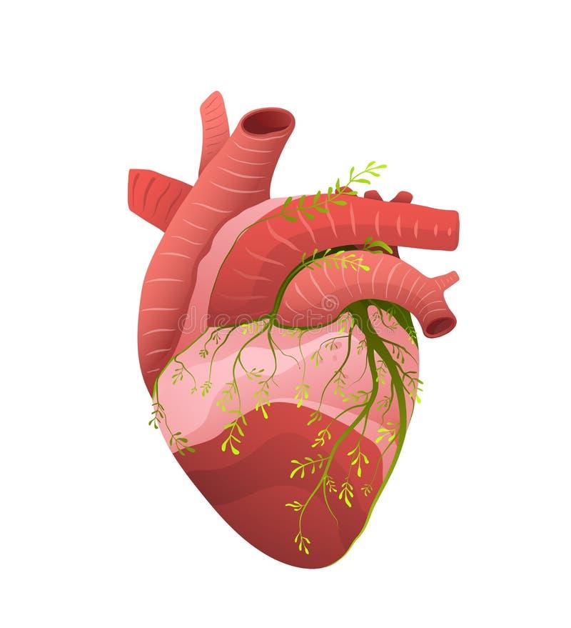 Healthy heart organ metaphor flat vector illustration. Growing plant on human muscular internal organ abstract illustration. Heart disease prevention and health stock illustration