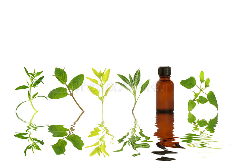 Healthy Herb Leaf Selection. Herb leaf sprigs and an aromatherapy essential oil bottle with reflection in rippled water, over white background royalty free stock image