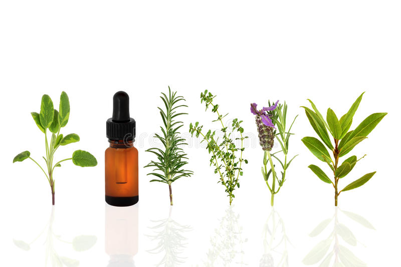 Healthy Herbs stock images