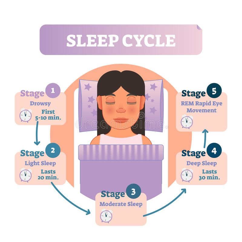 Healthy human sleep cycle vector illustration diagram with female in bed and sleep stages. Educational infographic scheme. vector illustration