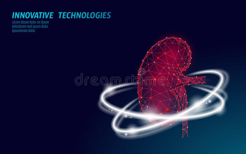 Healthy kidney internal organ 3d low poly geometric model. Urology system medicine disease treatment. Future science. Technology glowing arrows vector stock illustration