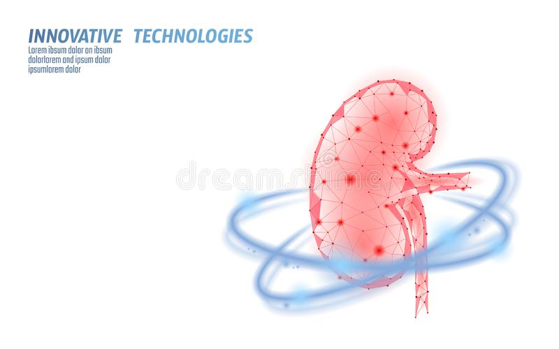 Healthy kidney internal organ 3d low poly geometric model. Urology system medicine disease treatment. Future science. Technology glowing arrows vector royalty free illustration