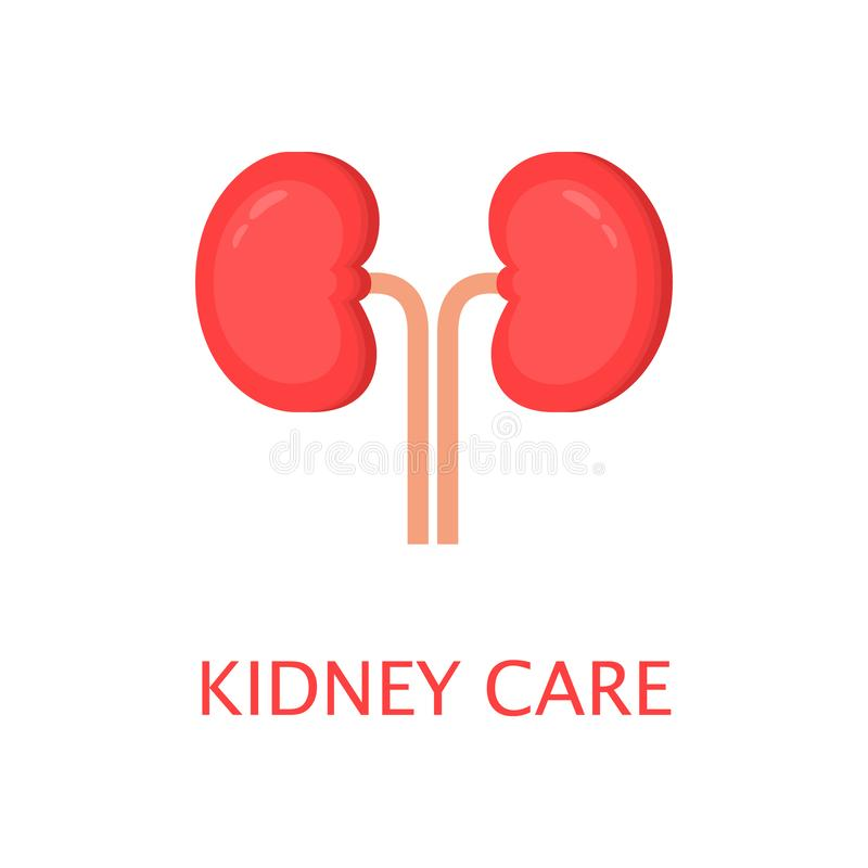 Healthy kidneys in flat style. Left and right kidney. Human internal organ. Anatomy concept. World kidney day. Cute cartoon vector stock illustration