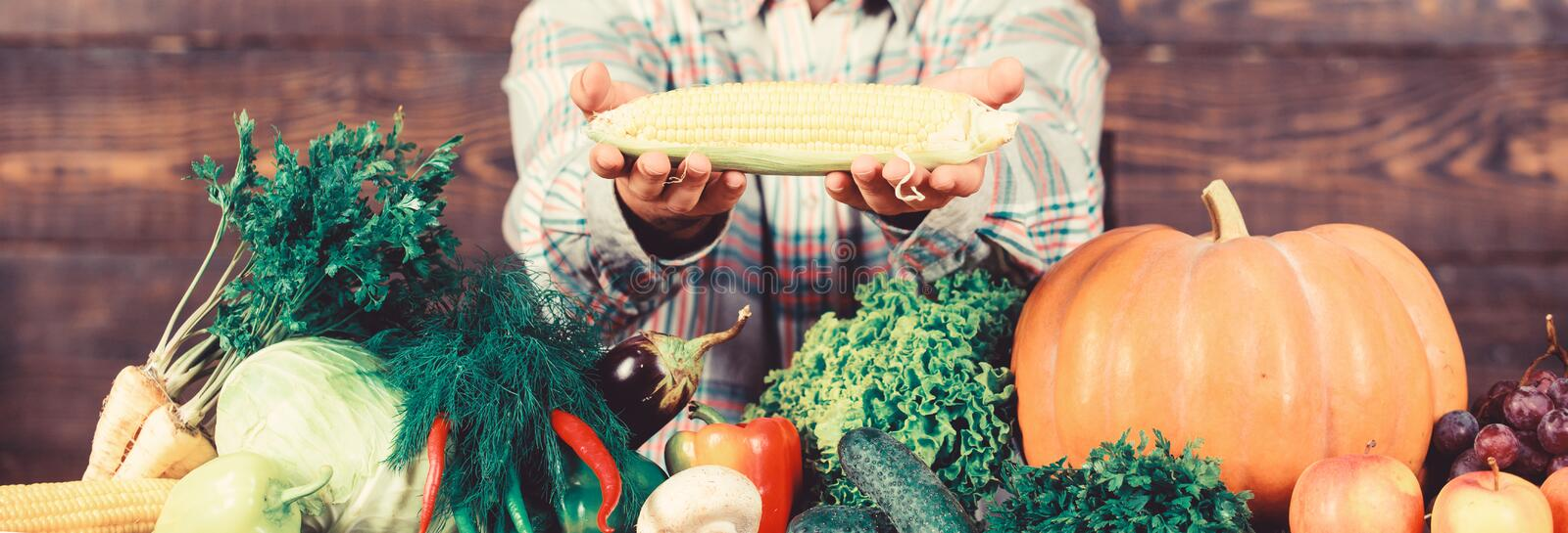 Healthy lifestyle. Farmer hold corncob or maize wooden background. Farmer presenting organic homegrown vegetables. Homegrown organic harvest benefits. Grow stock photo