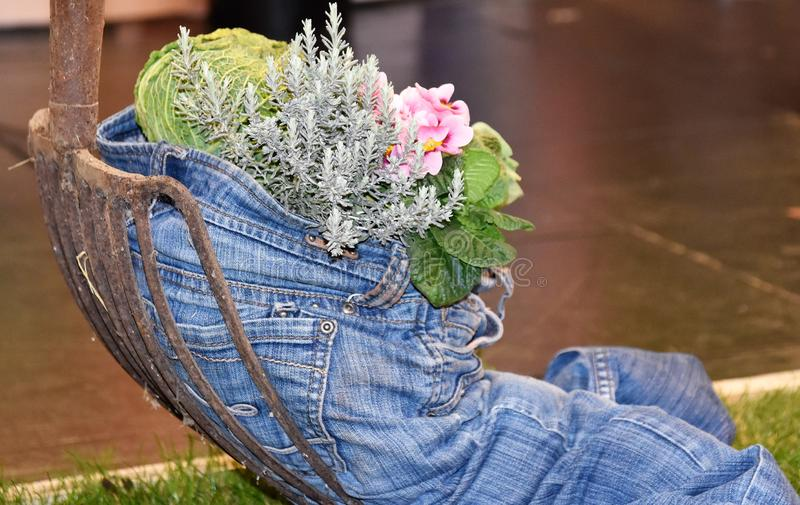 Healthy lifesytyle blue jean stuffed with vegetables. A blue jeans is filled with onions, carrorts, flowers and greens depicts that healthy lifestyle oriented royalty free stock images
