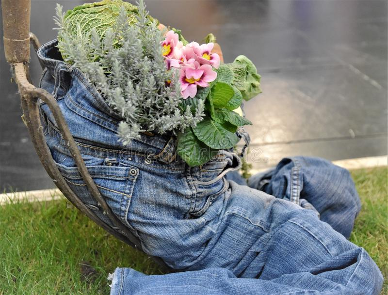 Healthy lifesytyle blue jean stuffed with vegetables. A blue jeans is filled with onions, carrorts, flowers and greens depicts that healthy lifestyle oriented stock photo