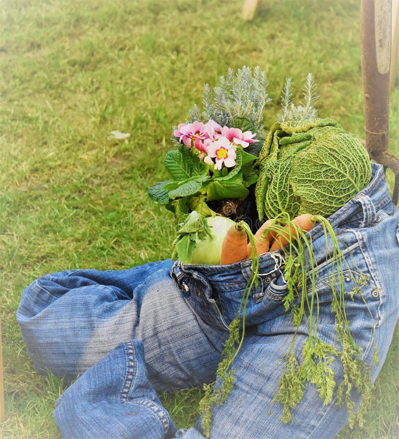 Healthy lifesytyle blue jean stuffed with vegetables. Side view of blue jeans is filled with onions, carrorts, cabbage, flowers and greens depicts that healthy royalty free stock photos
