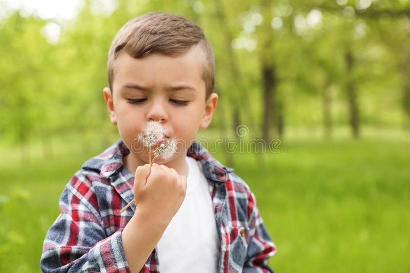 Healthy little boy blowing on dandelions outdoors stock images