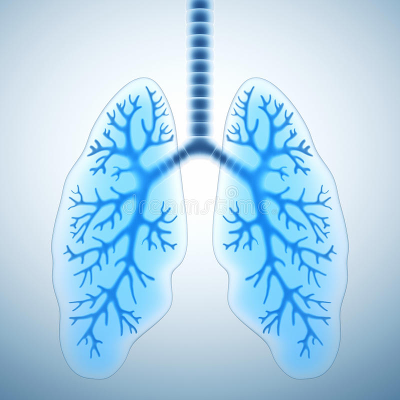 Healthy lungs royalty free illustration