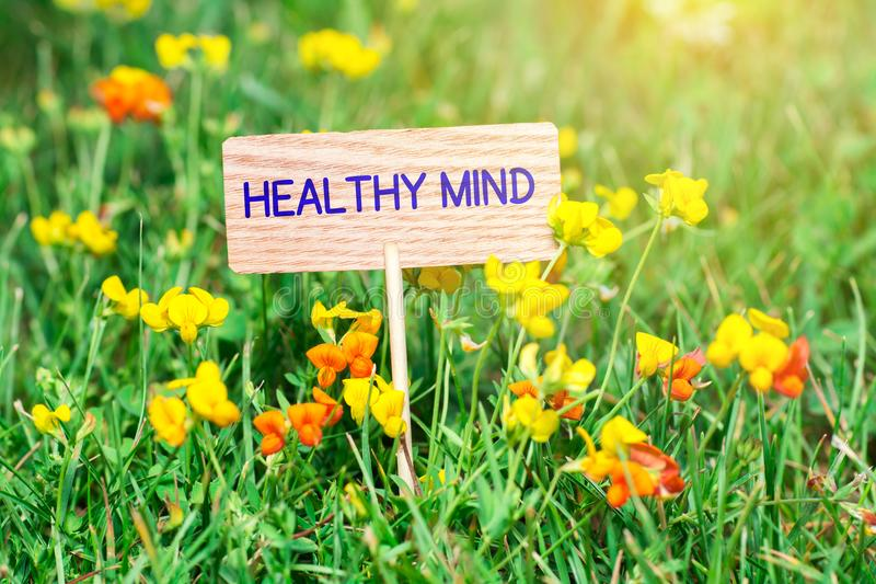 Healthy mind signboard. Healthy mind on small wooden signboard in the green grass with flowers and sun ray stock photo