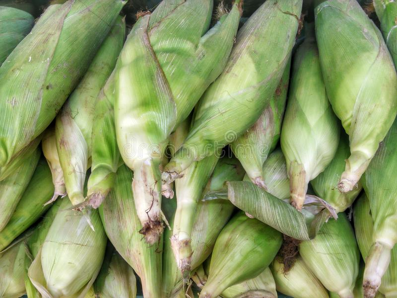 Is Corn Healthy?. Surprising Facts About the Nutritional Value of Corn royalty free stock images