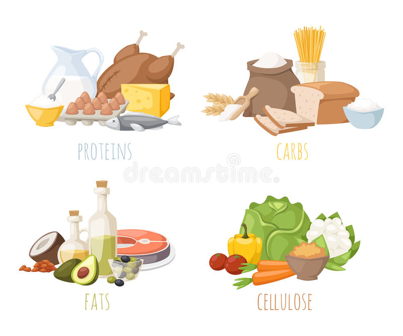 Healthy nutrition, proteins fats carbohydrates balanced diet, cooking, culinary and food concept vector. royalty free illustration