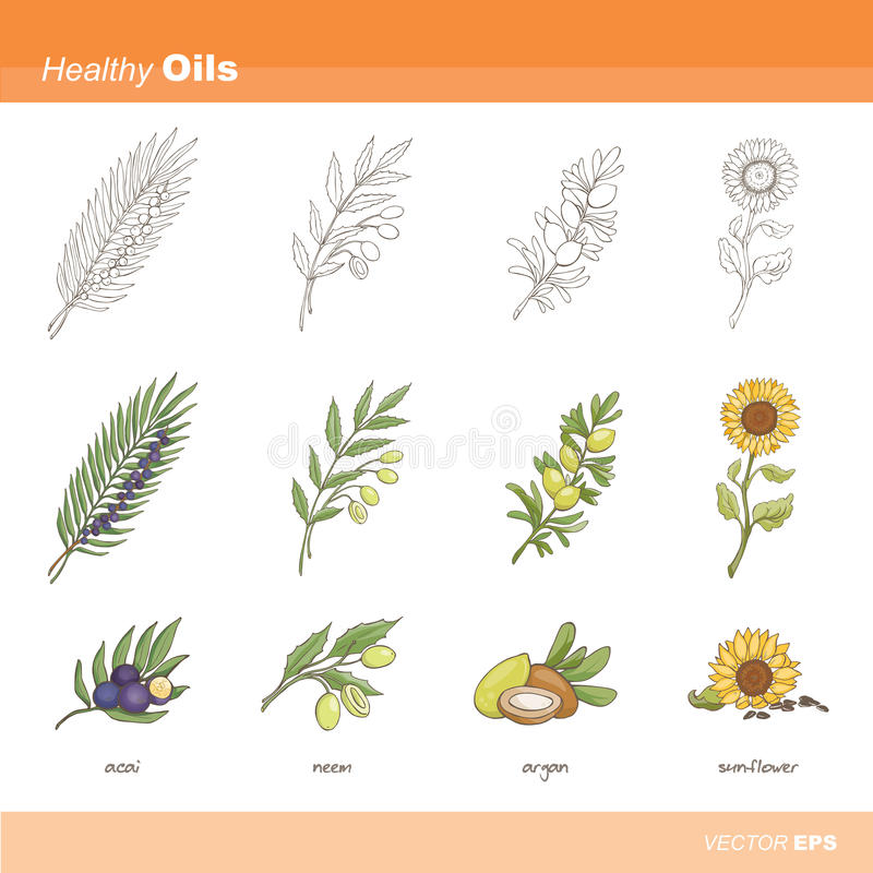Healthy oils stock illustration
