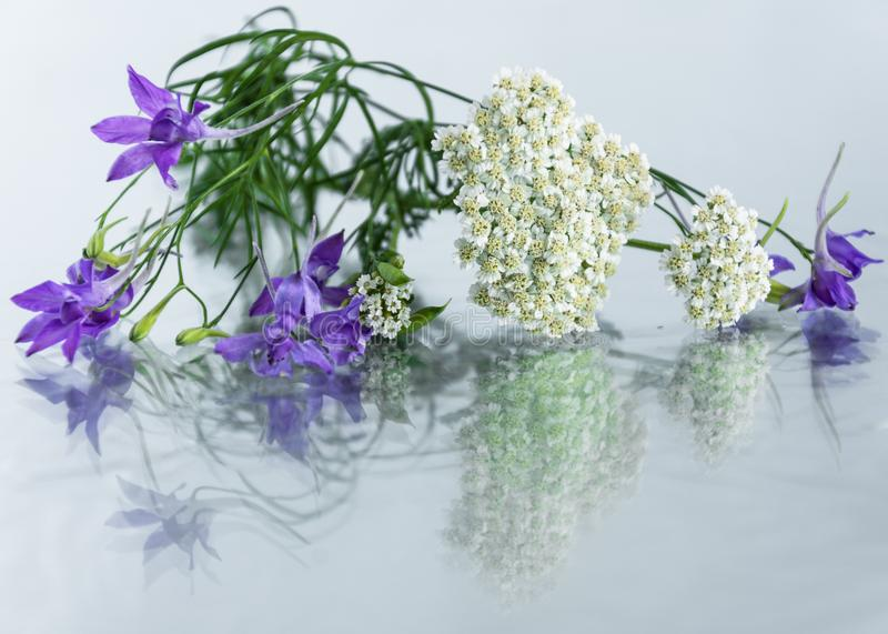 Rosemary and yarrow herb on glass background. stock photography