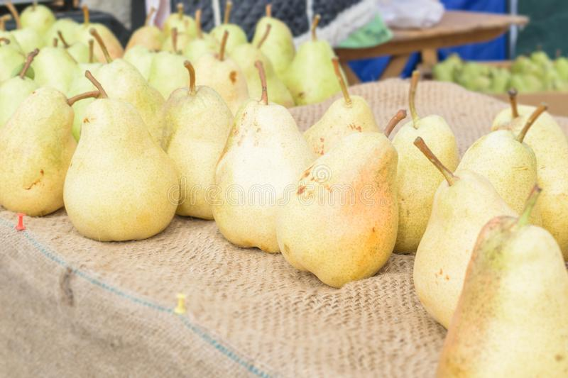 Healthy Organic yellow Pears on the table with burlap at village fair. Fruit harvest fresh picked William Bartlett pears in the royalty free stock photography