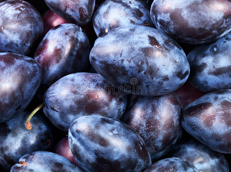 Healthy plums royalty free stock image