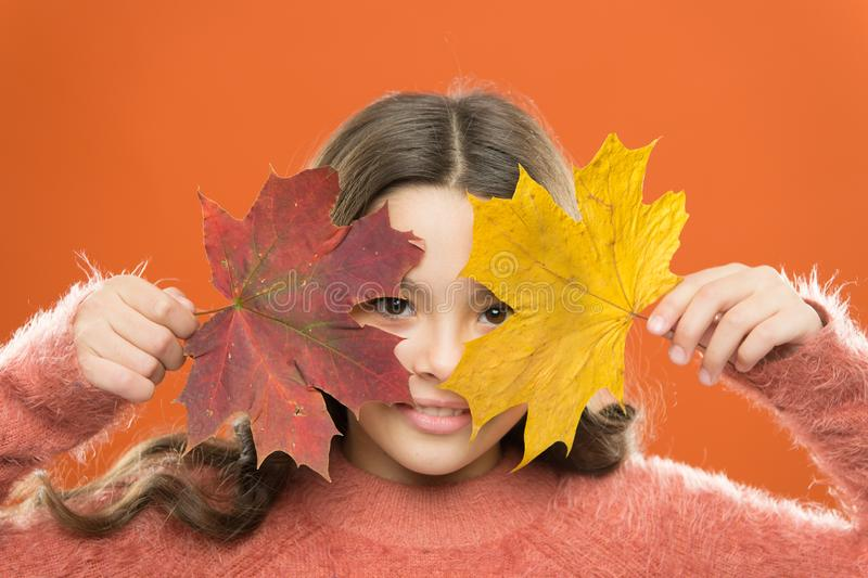 Healthy skin. How amazing autumn is. Little child cover face with maple leaves. Small girl smiling with autumn leaves royalty free stock images