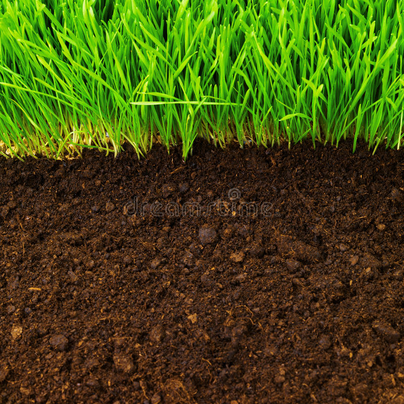 Healthy in soil royalty free stock images