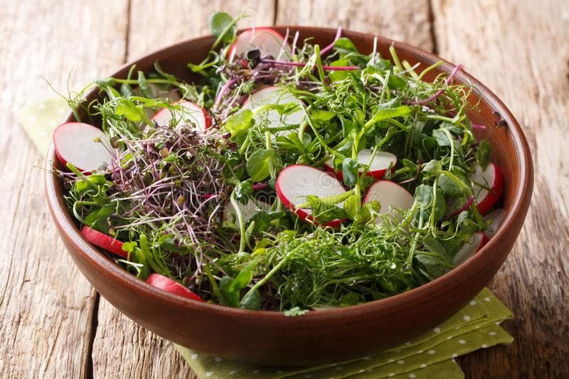 Healthy spring meal of radish salad with micro greens and lemon dressing close-up in a bowl. horizontal royalty free stock images
